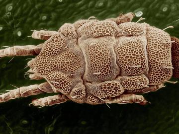 Paraziti – kaj so in kako vplivajo na naše zdravje